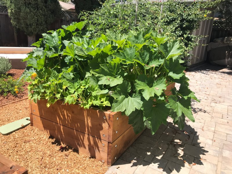Raised Wooden Planter Bed Front Side San Jose