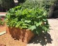 Raised Wooden Planter Bed Front Side San Jose